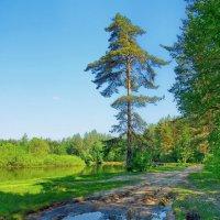 Последняя распутица весны... :: Лесо-Вед (Баранов)