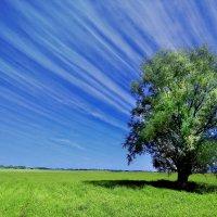 молодое дерево :: Вадим Виловатый