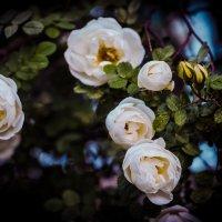 Цветы :: Суслов Евгений