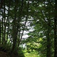 В летнем лесу :: valeriy khlopunov