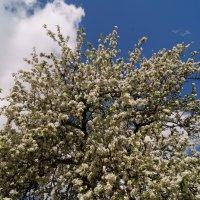 весна :: владимир володенок