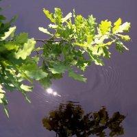 Признав могущество воды... :: Лесо-Вед (Баранов)