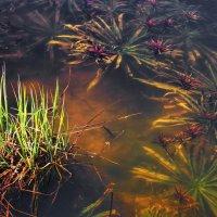 И под водой цветут сады... :: Лесо-Вед (Баранов)