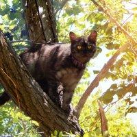 Кошка :: Natalia Babukh