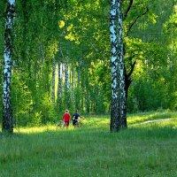 Зелёный берёзовый вечер.. :: Юрий Анипов