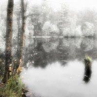 Лесное озеро :: Виталий