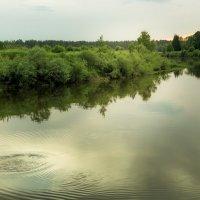Всплеск рыбы в тишине :: Игорь Вишняков