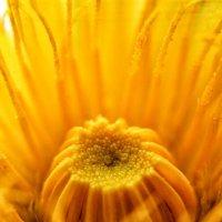 Душа цветка..... :: Inessa Shabalina