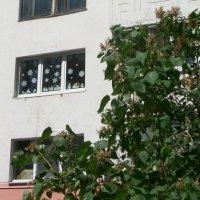Это ж как надо любить зимушку, чтоб до июня не снять снежинки с окна) :: Галина Бобкина