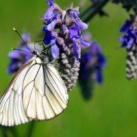 А бабочка крылышками бяк-бяк-бяк..)) :: Андрей Заломленков