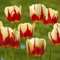 Весны прекрасные мгновенья... :: НАТАЛИ natali-t8