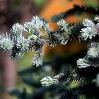 Голубая листва 2 :: Юлия Шарифуллина