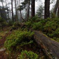 Тропинка туманного леса :: Александр Плеханов