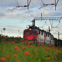 Цветы и железная дорога :: Мария Панькина