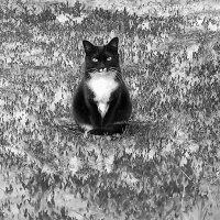 черно-белый :: Олег Белан