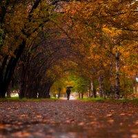 Осенняя аллея :: Антон Тихомиров