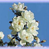Шипы и розы ... :: Татьяна