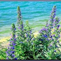 на  берегу  озера. :: Ivana