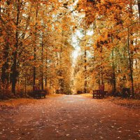 Осень в парке :: Юрий Григорьевич Лозовой