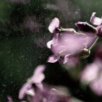 А за  окошком  дождь.. дождь.... :: Валерия  Полещикова