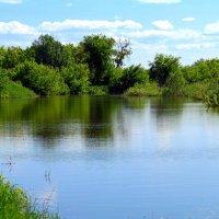 У лесного пруда :: Андрей Заломленков