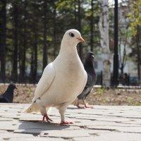 Птиц :: Kharlo Landersn