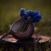 цветы :: Виктор Переверзев