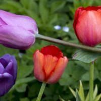 Краски весны 2 :: Viacheslav