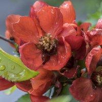 Краски весны 1 :: Viacheslav