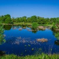 Затопленная низинка :: Сергей Тагиров