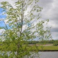 весенний ветер :: tatiana lanskaya