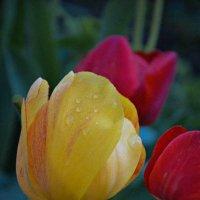 flowers :: Юлия Савицкая