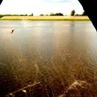 застрявший парашют одуванчика :: Александр Прокудин