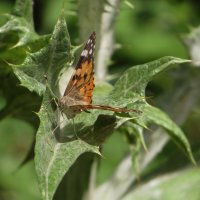 А бабочка крылышками... :: Наталья (D.Nat@lia)