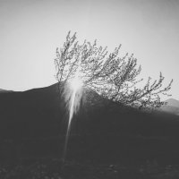 дружба солнечного света и дерева.. :: Батик Табуев