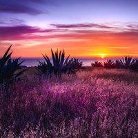 The colors of Cyprus :: Ruslan Bolgov
