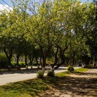 деревья :: Артём Бояринцев