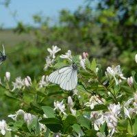 Бабочки :: Ольга