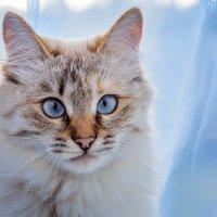 Кошка Мурка на окне :: Дмитрий Стёпин