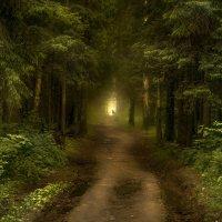 Лесной призрак :: Алексей Строганов