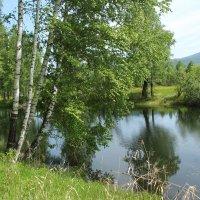 Лесное озеро :: Лариса