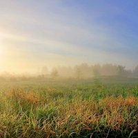 солнце в тумане... :: юрий иванов