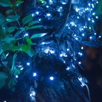 Ночные огоньки на деревьях :: Сергей Алексеев