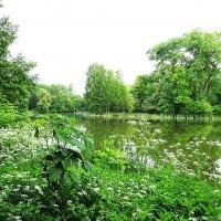 Природа просто пышет сочной зеленью :: Маргарита Батырева
