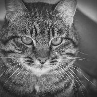 Котик :: Настя Неверова