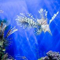 аквариум :: Сергей Кордумов
