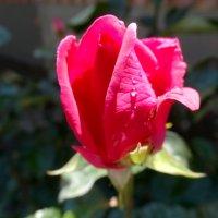 Слёзы юной красавицы... :: Тамара (st.tamara)