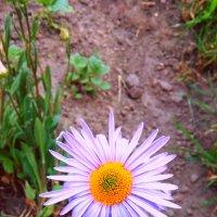 Цветок :: Вероника Озем