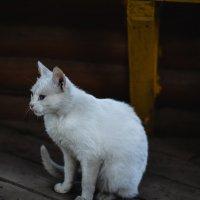 meow ^^ :: Аня Струкова
