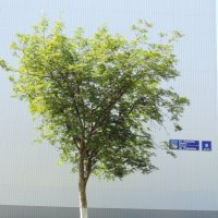 Стена и дерево. :: bemam *